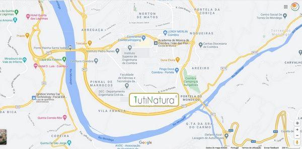 Tutinatura - Coimbra